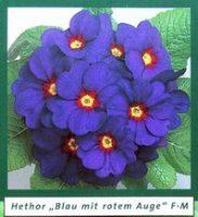blaurot