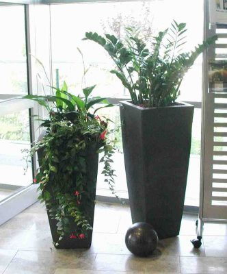 Raumpflanzen 3